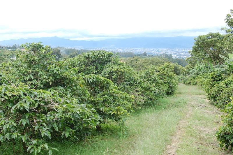 Costa Rica1